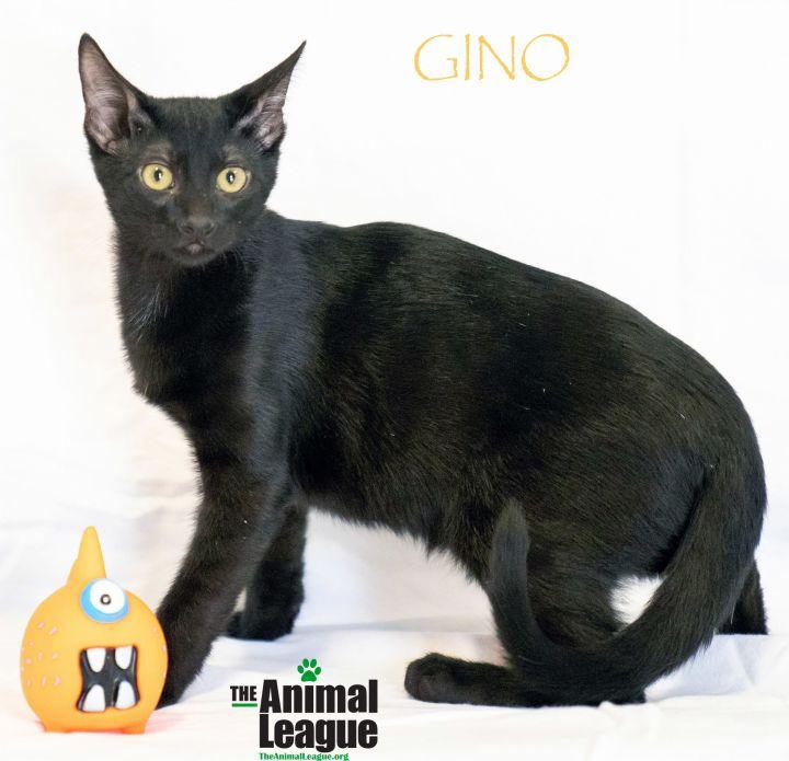 Gino 1