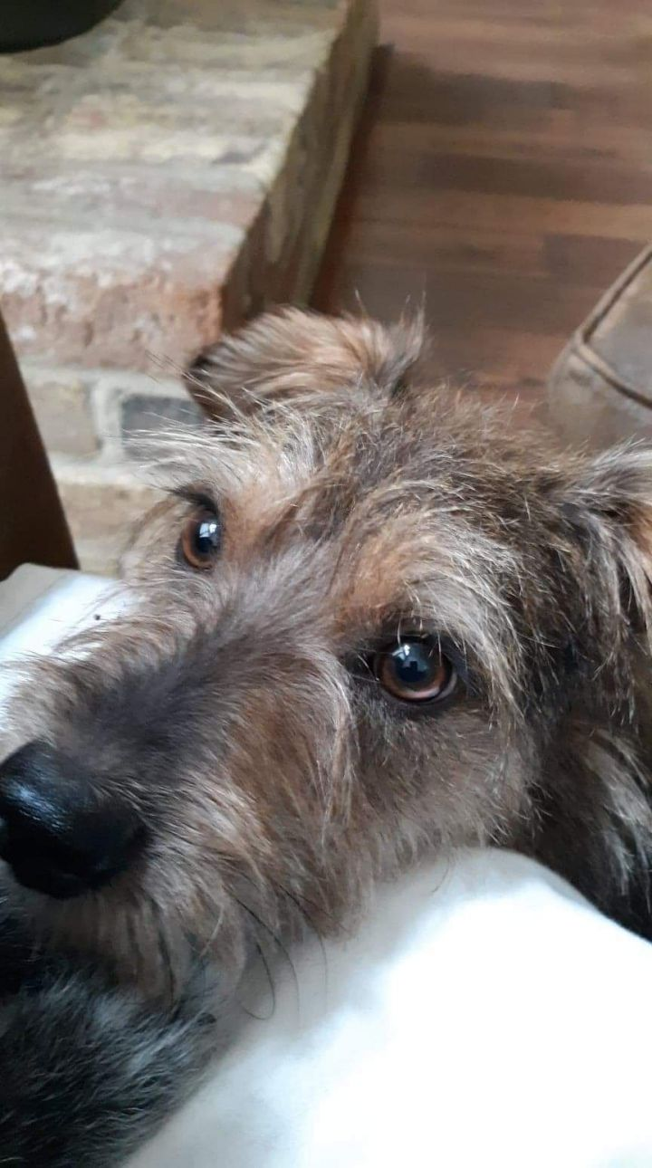 Bo, an adopted Terrier Mix in Plantersville, TX_image-1