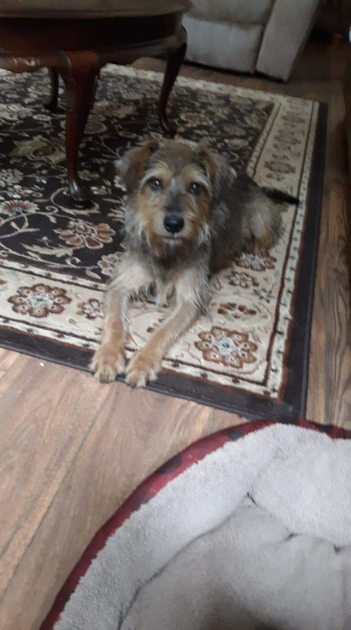 Bo, an adopted Terrier Mix in Cypress, TX