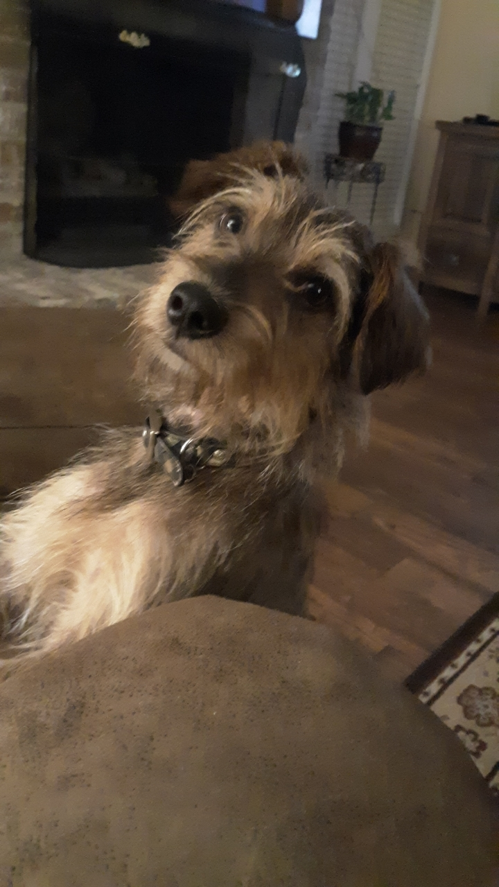 Bo, an adopted Terrier Mix in Plantersville, TX_image-3