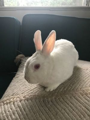 Snowball was initially rescued from a shelter by her loving mama When her adopter tragically passed