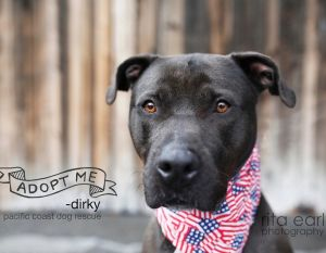 Handsome smart and trained Dirky is the full package Hes a big guy with a soft heart he loves t