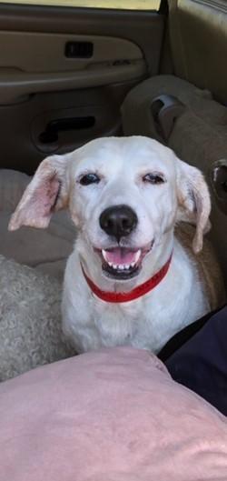 Sally Joe Beagle Dog
