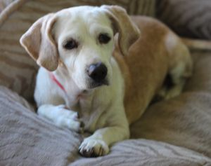 Sally Joe is really cute and pretty darn sweet She has chronic ear issues so you have to be ready