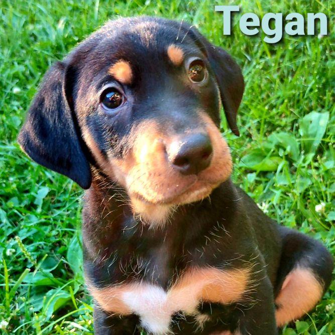 Tegan ADOPTION PENDING