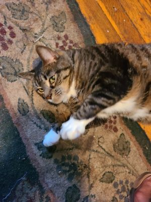 Miss Kitty is a very sweet and loving girl It takes her some time to warm up to