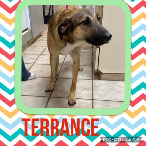 Hi my name is Terrance I can be really shy in new situations and with new people but who can