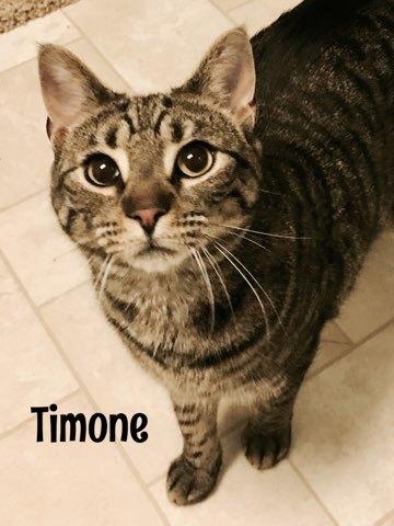 Timone 1
