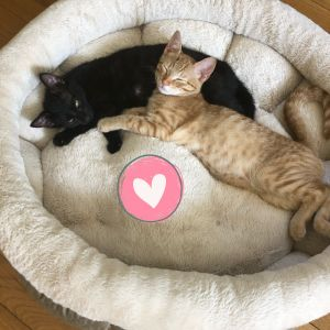 Meet Peter Pan and Tinkerbell These darling two brothers and one sister are so sweet and ready to