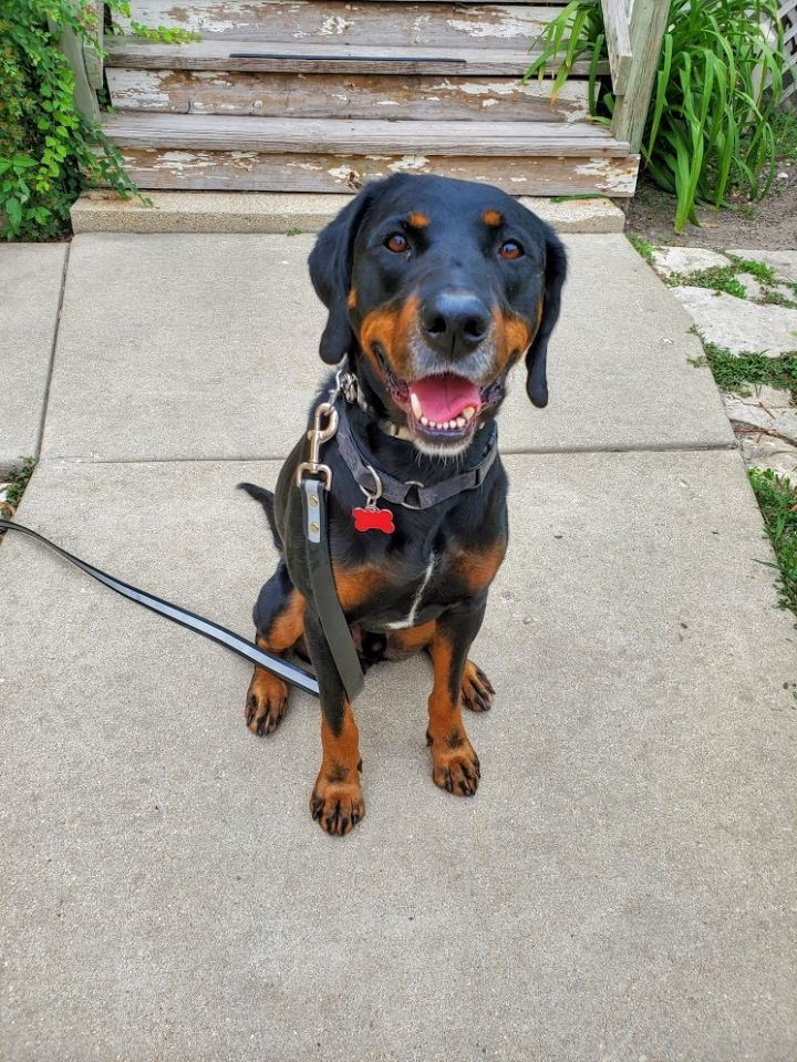 Lenny*Needs experienced adopter* 3