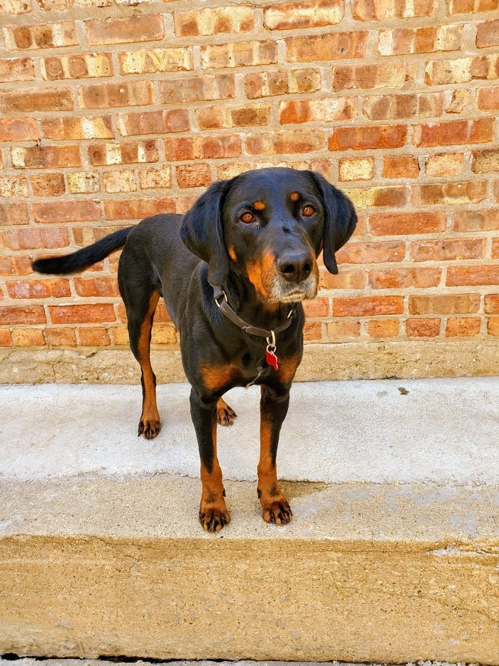 Lenny*Needs experienced adopter* 6