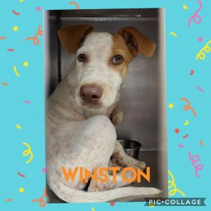 Winston was dumped out in the woods luckily he was found by a good samaritan and got Winston to saf