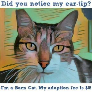 Due to COVID-19 all adoptions will be by appointment only To adopt complete our online adoption a