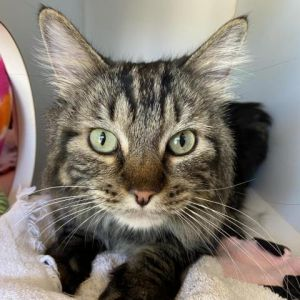 Troy is 5-years-old and looking for a home Once hes had time to adjust Troy likes to show affecti