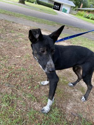 Meet Lilah She was dumped by a small town in Texas and picked up by a rescue S