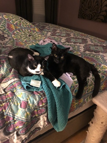 Zoe & Sasha 3