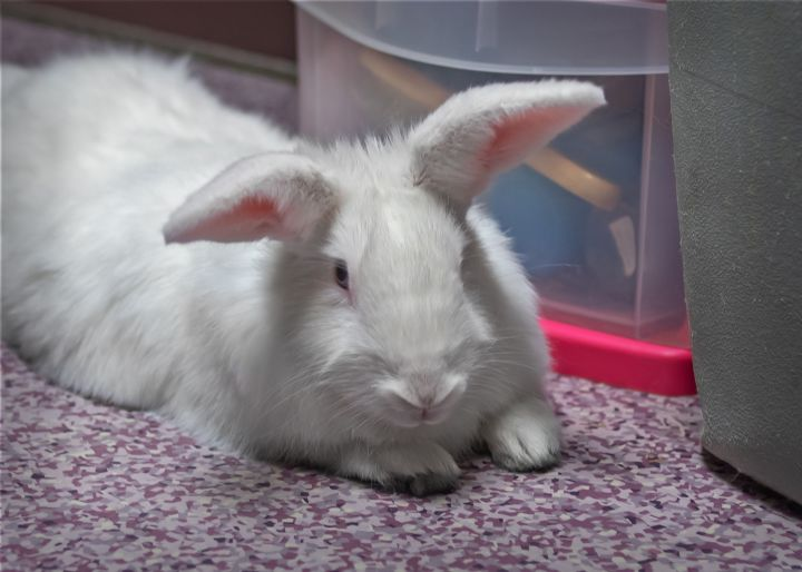 Mary Hoppins, an adopted New Zealand Mix in Harrisburg, PA_image-1