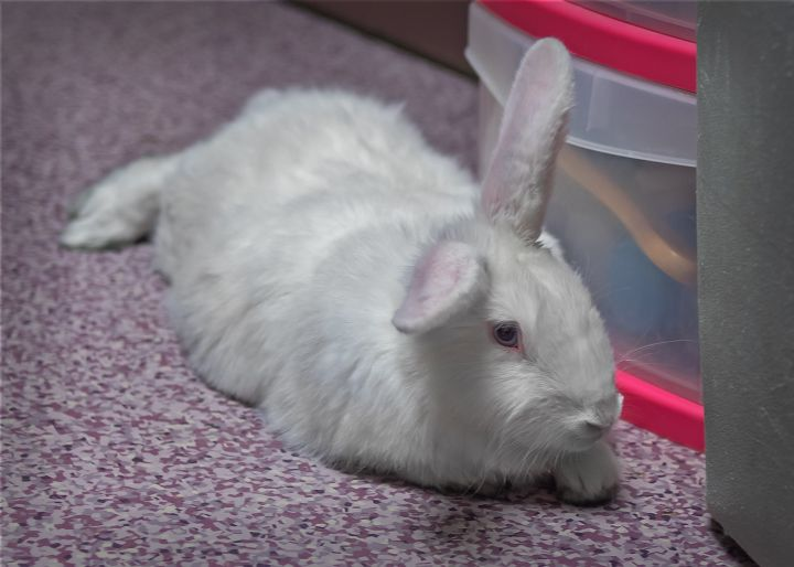 Mary Hoppins, an adopted New Zealand Mix in Harrisburg, PA_image-4