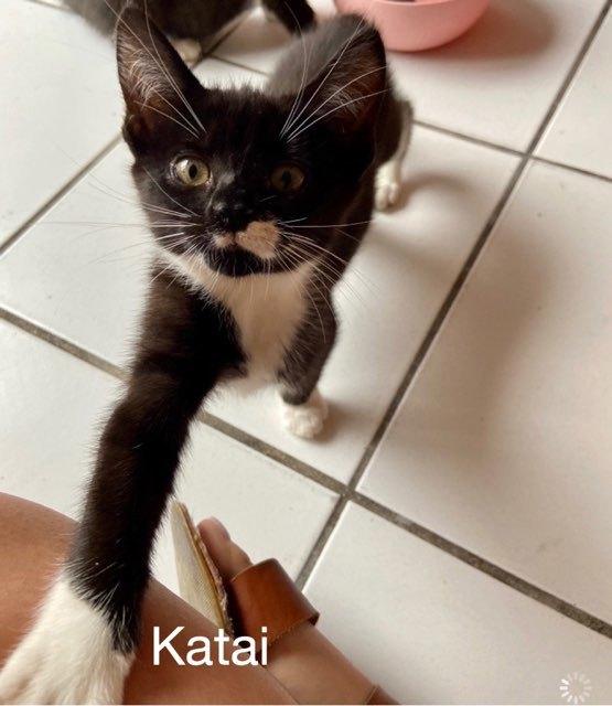 Katai 1