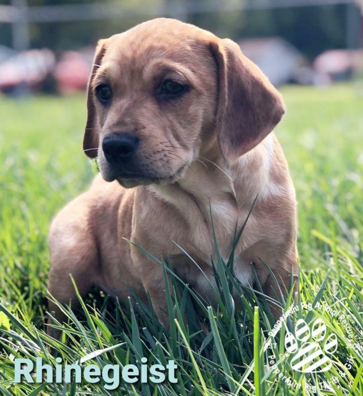 Rhinegeist ADOPTION PENDING 3