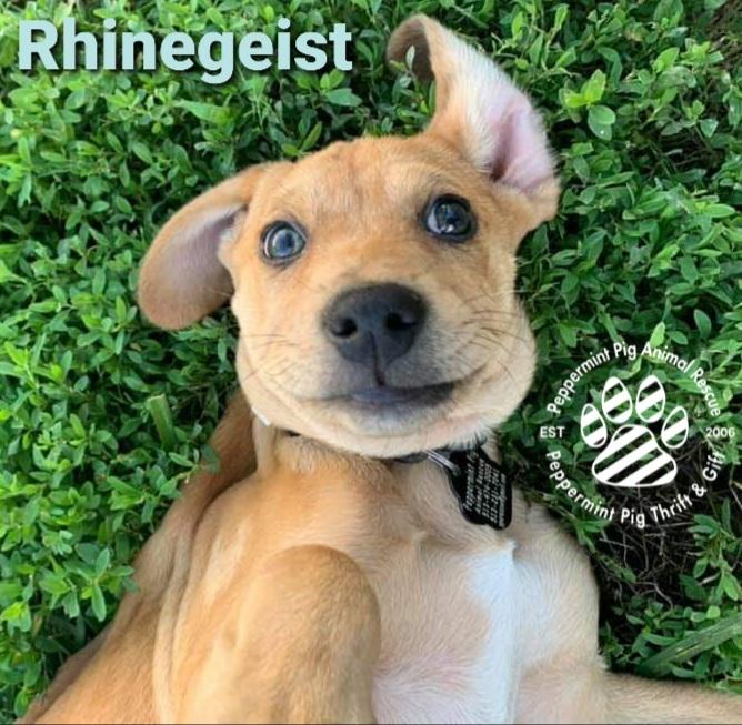 Rhinegeist ADOPTION PENDING 4