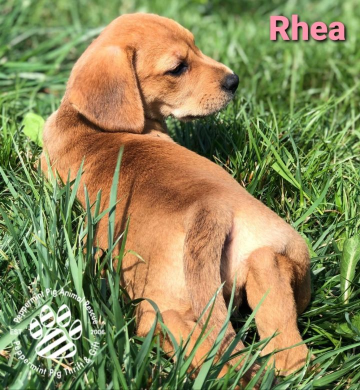 Rhea ADOPTION PENDING 3