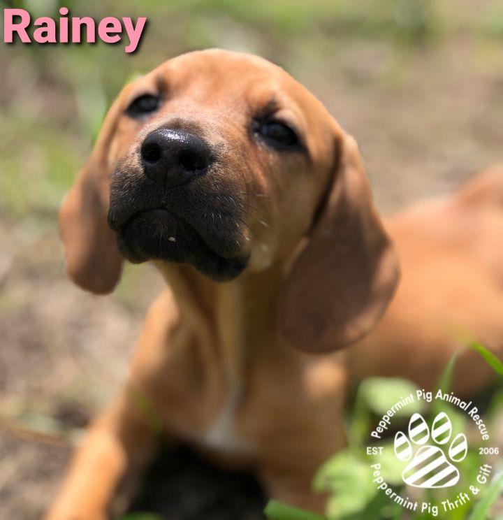 Rainey ADOPTION PENDING 1