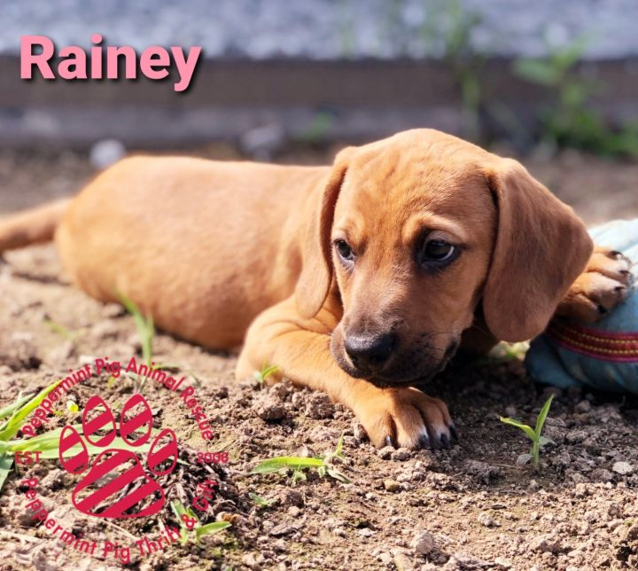 Rainey ADOPTION PENDING 3