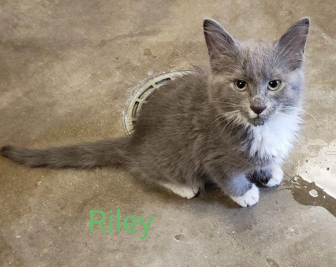 Riley @ Petsmart in Lawrence (Iowa Street)