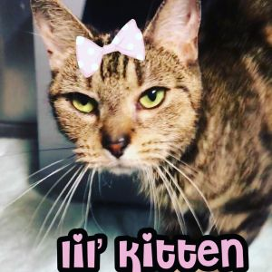 Lil Kitten is an adorable petite and very sweet cat who is  4 years young She was brought to