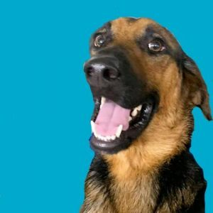 I am new to HSSET I was pulled from a local animal control agency to be saved from euthanasia I
