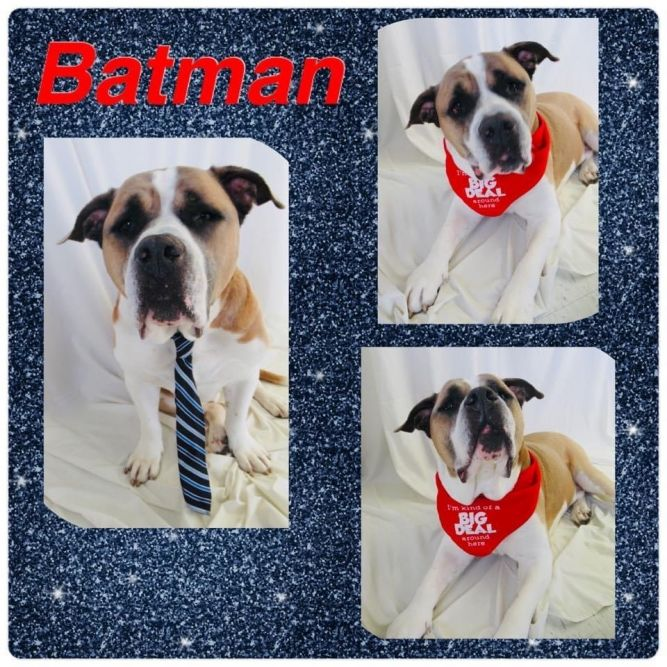 Batman - Pawsitive Direction Program
