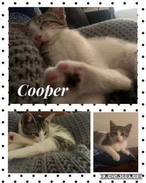 Siblings are the best Cooper and Chili absolutely love spending their time together cuddling and