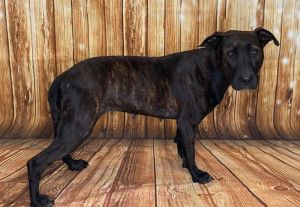 Ester 41706 is a gentle girl looking for a quiet and loving home She was brought to BAC by an