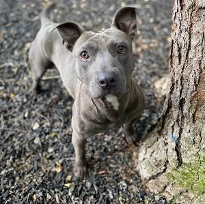 Echo, an adoptable Mixed Breed in Decatur, GA
