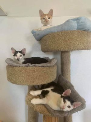 Say Hello to our new arrivals Nacho is holding the fort up high and then we have Chip and Oreo