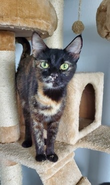 Say hello to Minx Minx is the perfect companion She enjoys following her person around lounging o