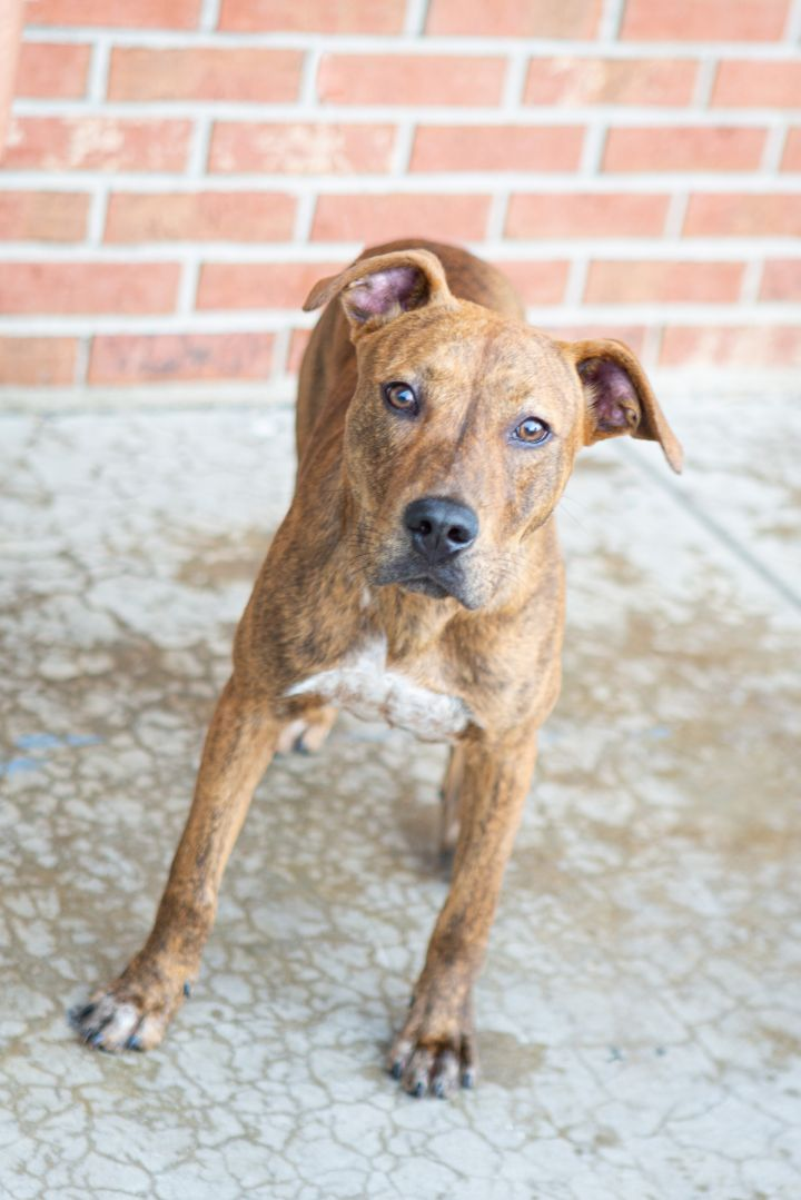 PERCY, an adopted Mixed Breed in Cape Girardeau, MO