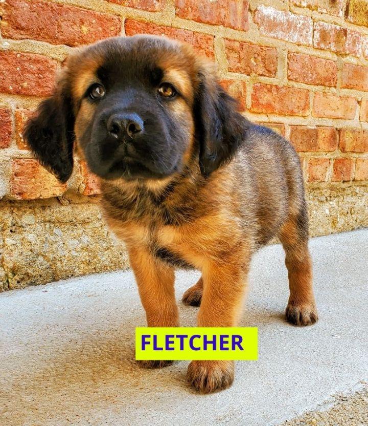 Fletcher(ADOPTED!) 6