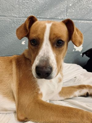 Birthdate 7162018 Breed One of a kind Weight 40 lbs Before you can meet sweet Lou please compl