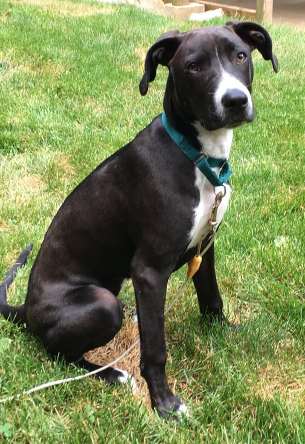 Tatum *HERE IN NH*, an adopted Mixed Breed in Northwood, NH