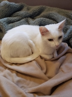 Chloe is a two year old female very gentle and loving please call 562-337-5577