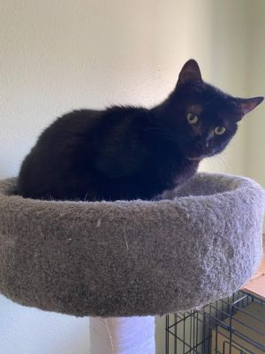 Lori is a very friendly sweet 1 yrs old black girl Loves to be petted likes to sit next to