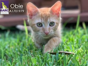 Obie right is a bold little guy who has never found a shoulder too high or a l