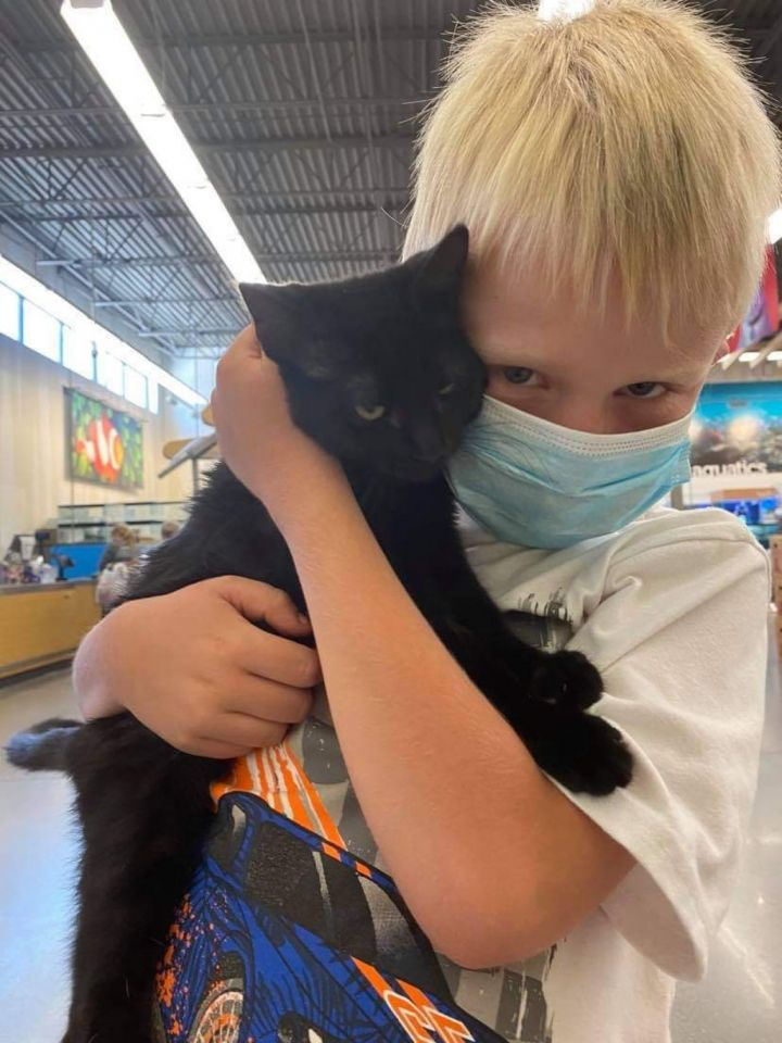 Jerry, an adopted Domestic Short Hair in Spanish Fork, UT