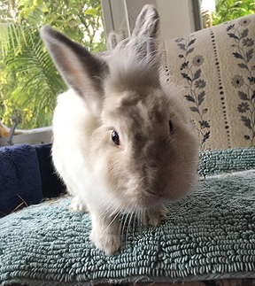 Rayla needs a bunny husbun Let us set up a date with your lonely bachelor bunny