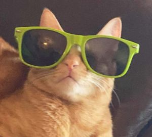 Howdy Im Milo a 9-month old orange boy from Doha Qatar Im on my way to NYC the week of