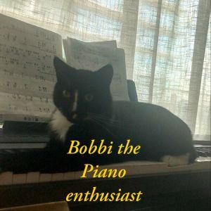 Meet Bobbie This handsome  friendly short tailed gentle boy was found struggling to survive near