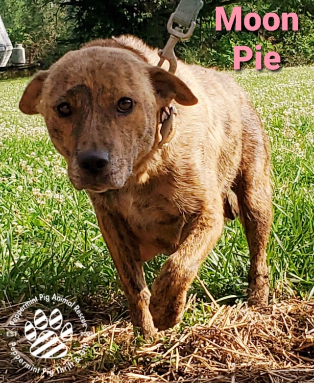 Moon Pie ADOPTION PENDING 2