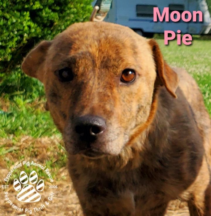 Moon Pie ADOPTION PENDING 4